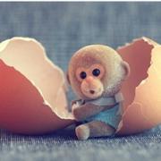 期待我的小猴猴