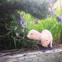 期盼我的猪猪宝贝