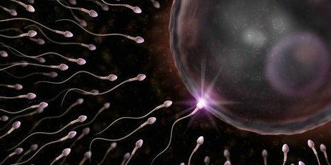精子和卵子的存活时间有多久